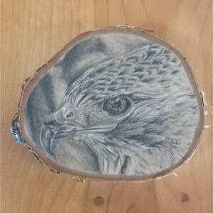 hawk drawing by Jonah Osgood